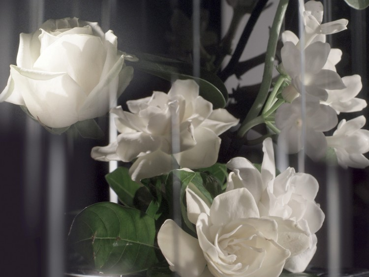 ACCORD_FLORAL_ROSE_BULGARE_GARDENIA_RVB